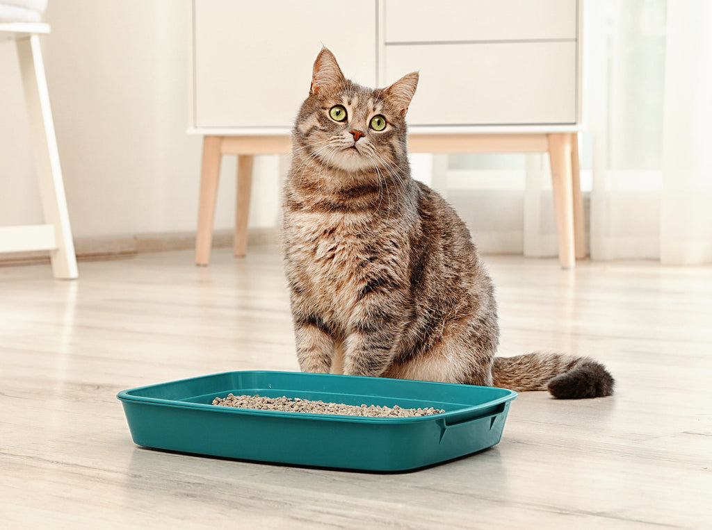 Why Won't My Cat Use The Litter Box?