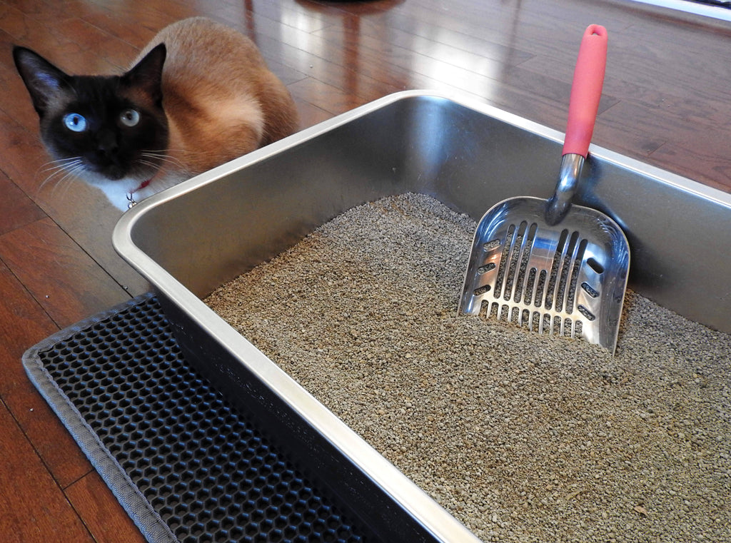 Litter Box 101: Setting Up Your Cat's Restroom