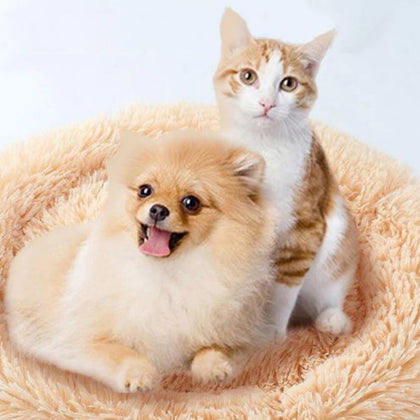 Common items for cats and dogs