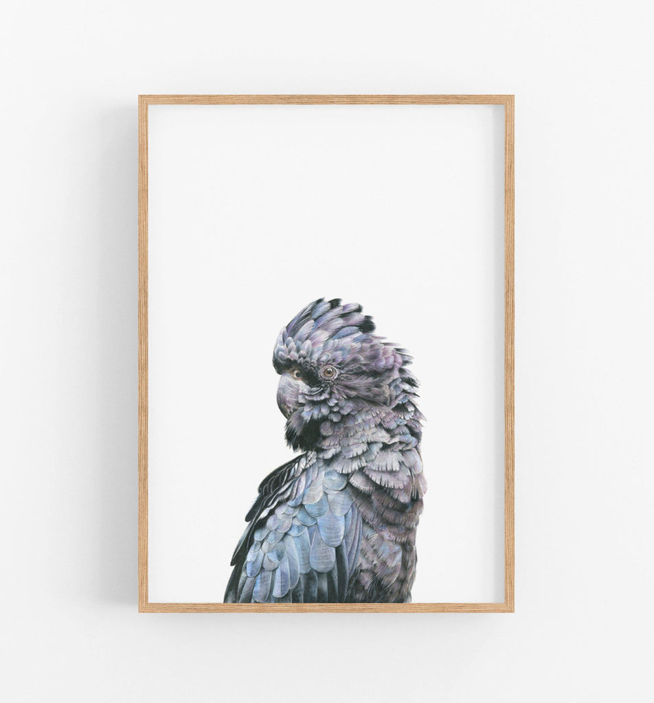 pencil drawing of a black cockatoo in a teak frame