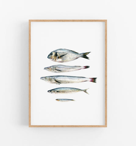 realistic fish drawing in a teak frame