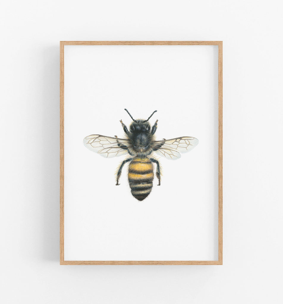black and yellow bee illustration in a teak frame