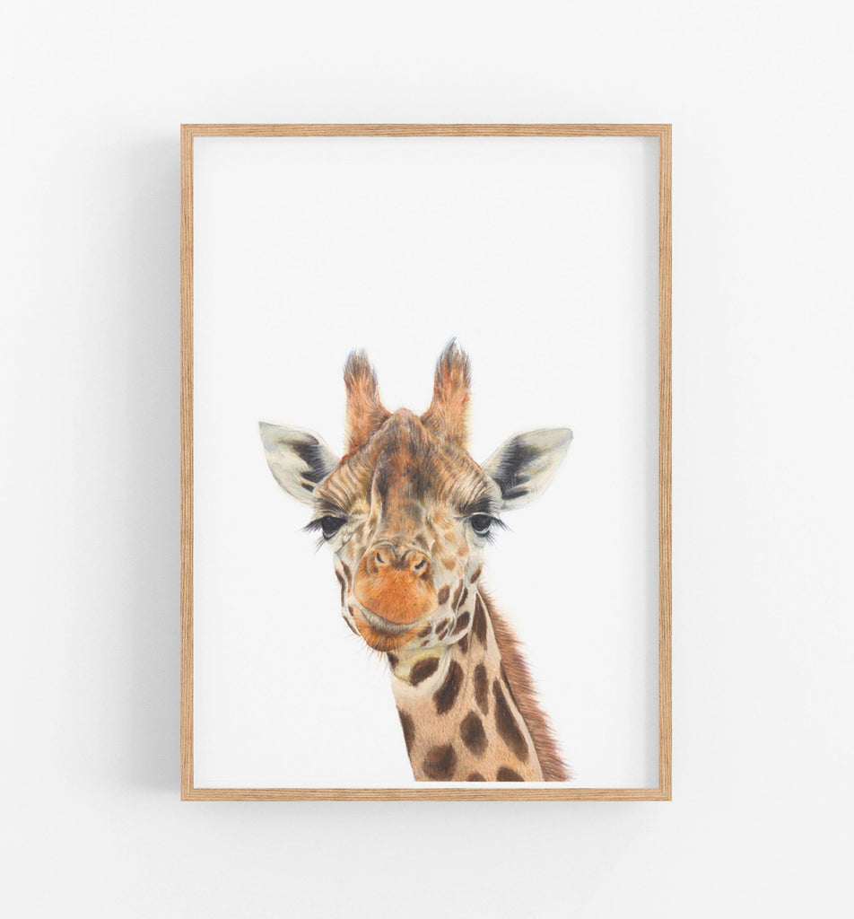 an art print of a drawing of the head of a giraffe in a teak frame