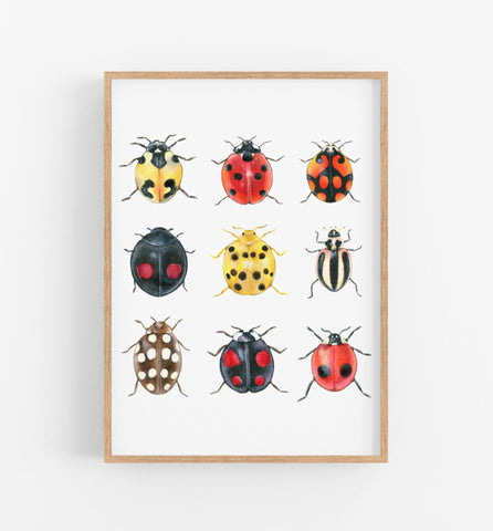nine drawings of ladybugs in a teak frame