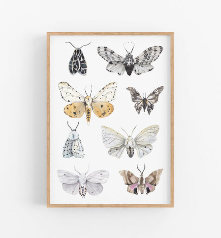 butterflies and moths art print in a teak frame
