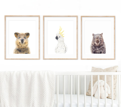 set of 3 Australian animal art prints hanging above a white cot in a nursery