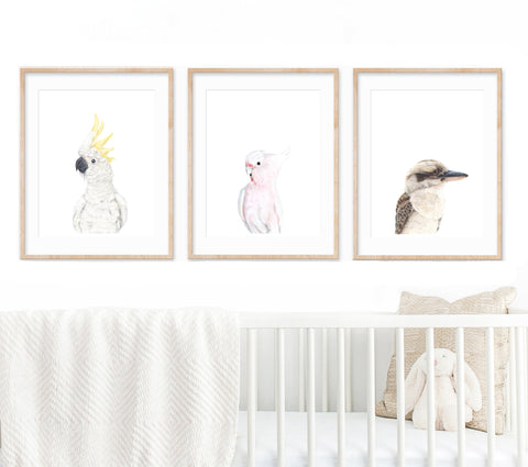 set of 3 Australian bird prints in wooden frames hanging above a white cot