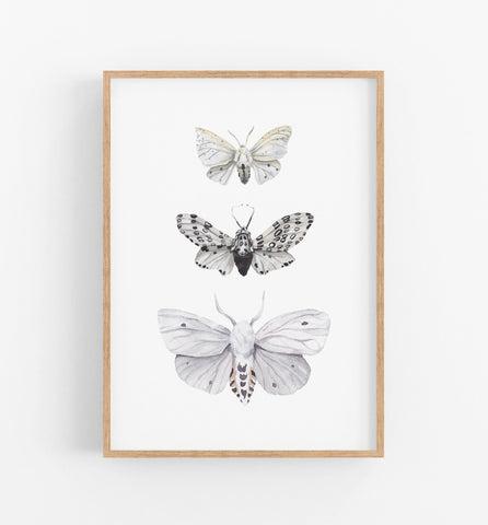 Butterfly Art Print - the wild woods