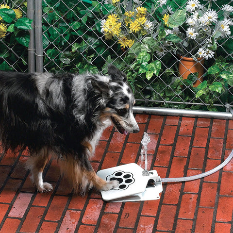 Thirsty Pet - A Drinking Water Fountain for Your Dog - Envy Gadgets