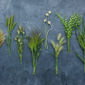 Grasses, Grains, and Pods