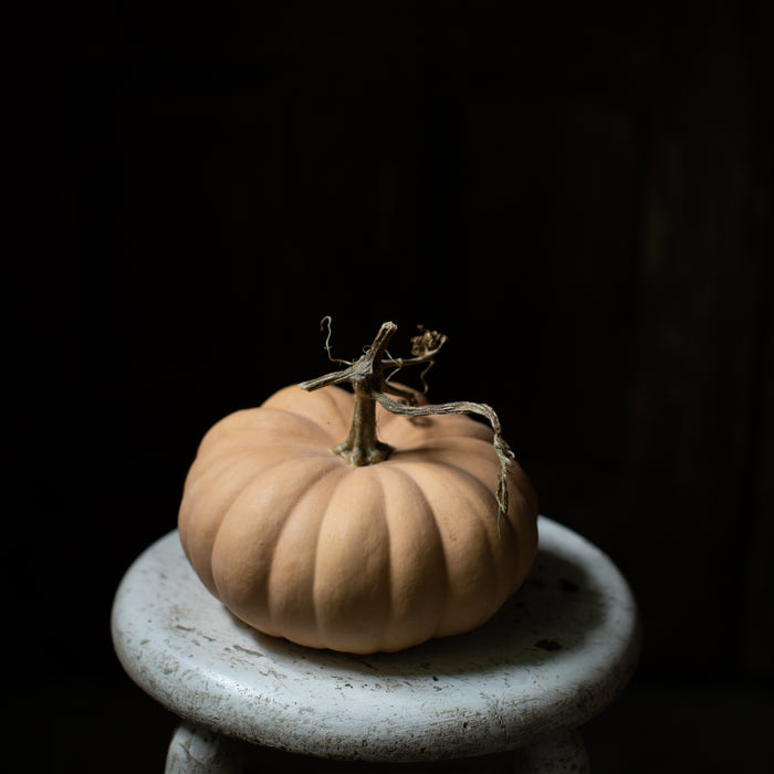 Ornamental Squash Autumn Crown