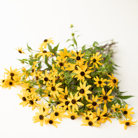 Black Eyed Susan Macau