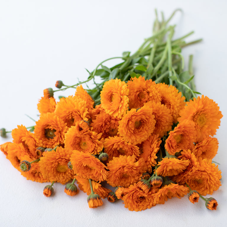 Calendula Greenheart Orange