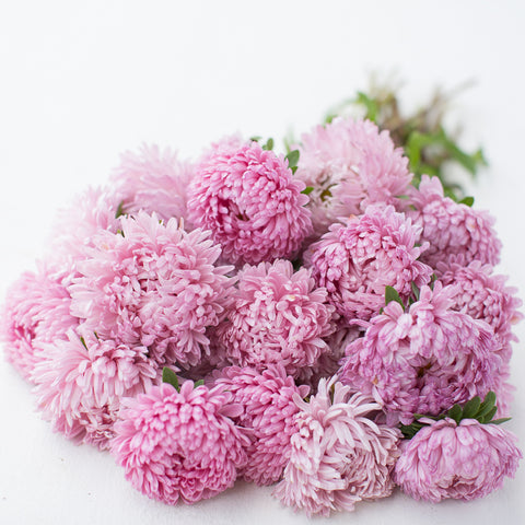 China Aster Rose Quartz Mix