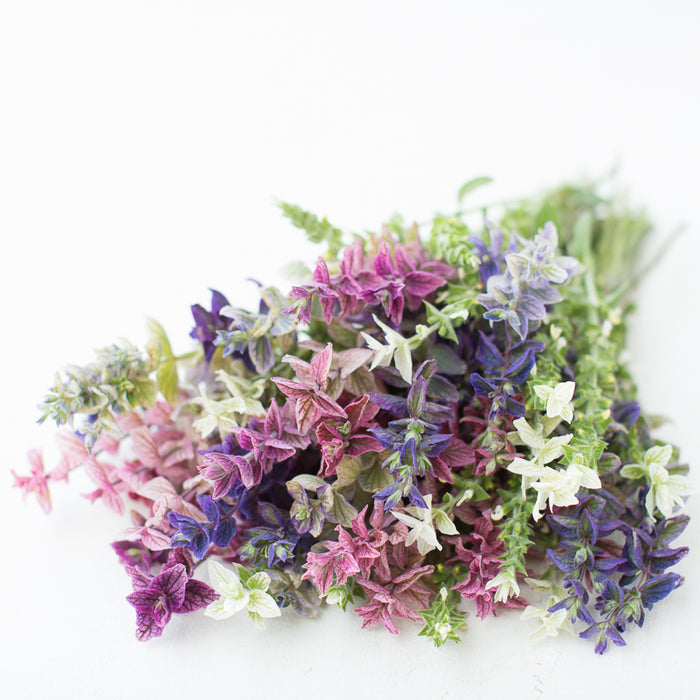 Clary Sage Clary Mix
