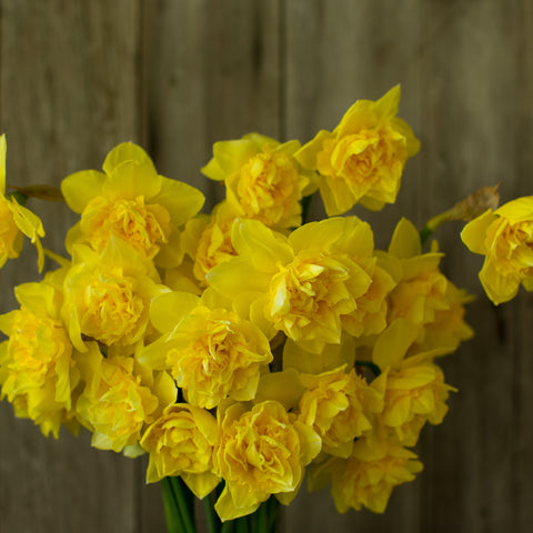 Narcissus Dick Wilden