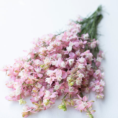 Larkspur Fancy Pink