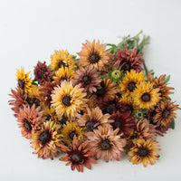Black Eyed Susan Sahara bunch