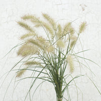 Feathertop Grass Floret Flowers