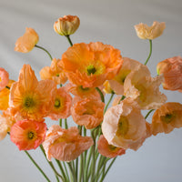 Iceland Poppies Giant Peach