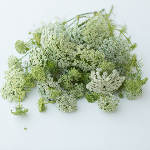 Queen Anne's Lace Green Mist