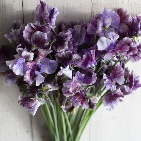 Sweet Pea Earl Grey