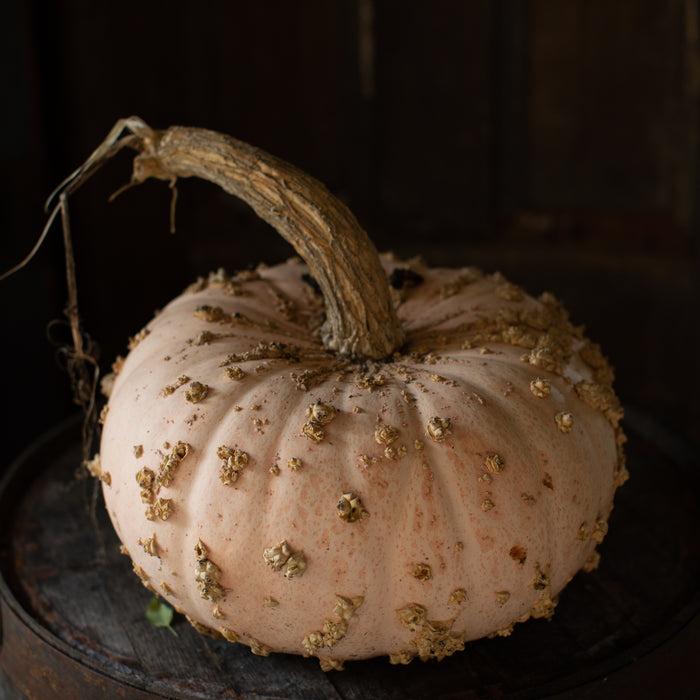 Ornamental Squash Galeux d'Eysines
