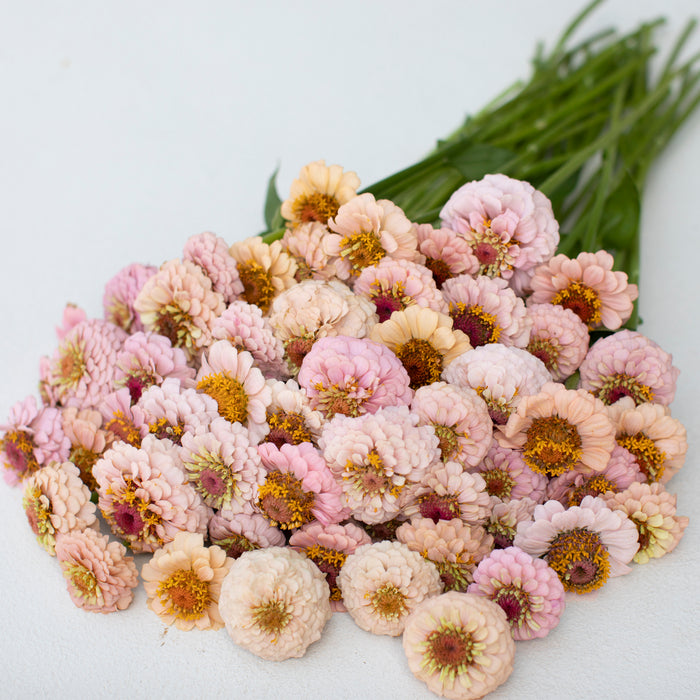 Zinnia Little Flower Girl Mix