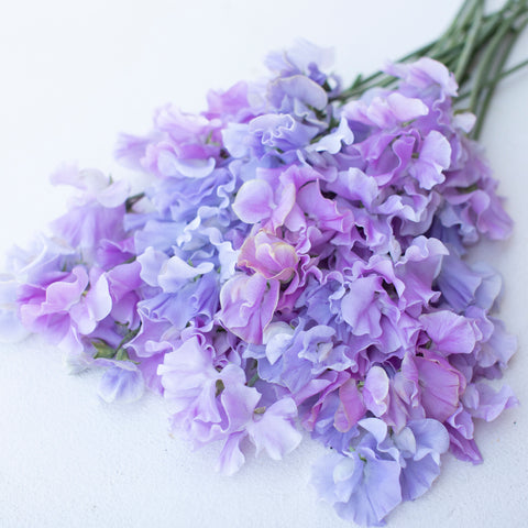 Sweet Pea Grower's Choice Lavender Ice Mix