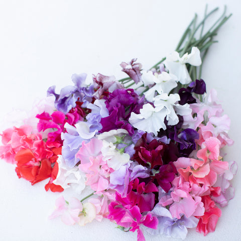 Sweet Pea Grower's Choice Pride Mix