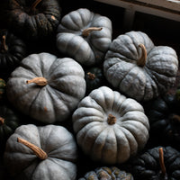 Ornamental Squash Triamble