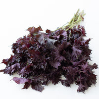 Shiso Purple Frills