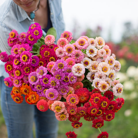 Zinnia Lilliput Mix