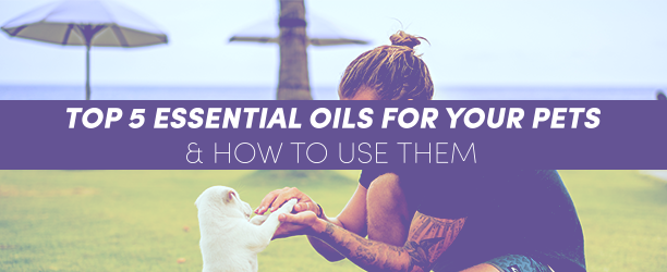 Komega6 TOP 5 ESSENTIAL OILS FOR YOUR PETS AND HOW TO USE THEM