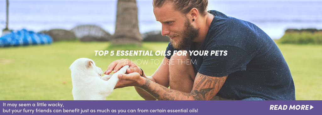 5 essential oils for pets blogpost