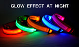 LED Lighting Pet Collar - DiscountTronics.com