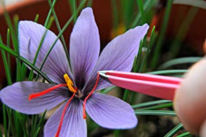 Saffron is a Safe and Effective Antidepressant