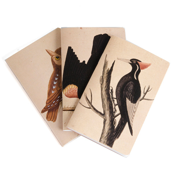 George Edwards Mini Notebooks - Set of Three