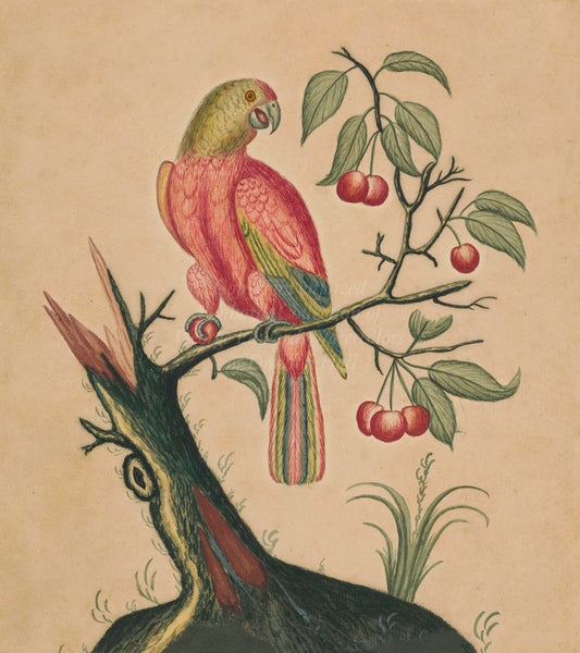 Parrot with Fruit