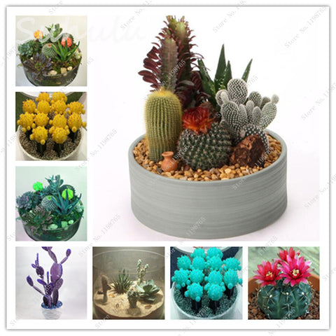 Meat Seeds Succulents Plant Balcony Plants Seed Anti-radiation Home Garden Gecoration Mixed - babiesrhere