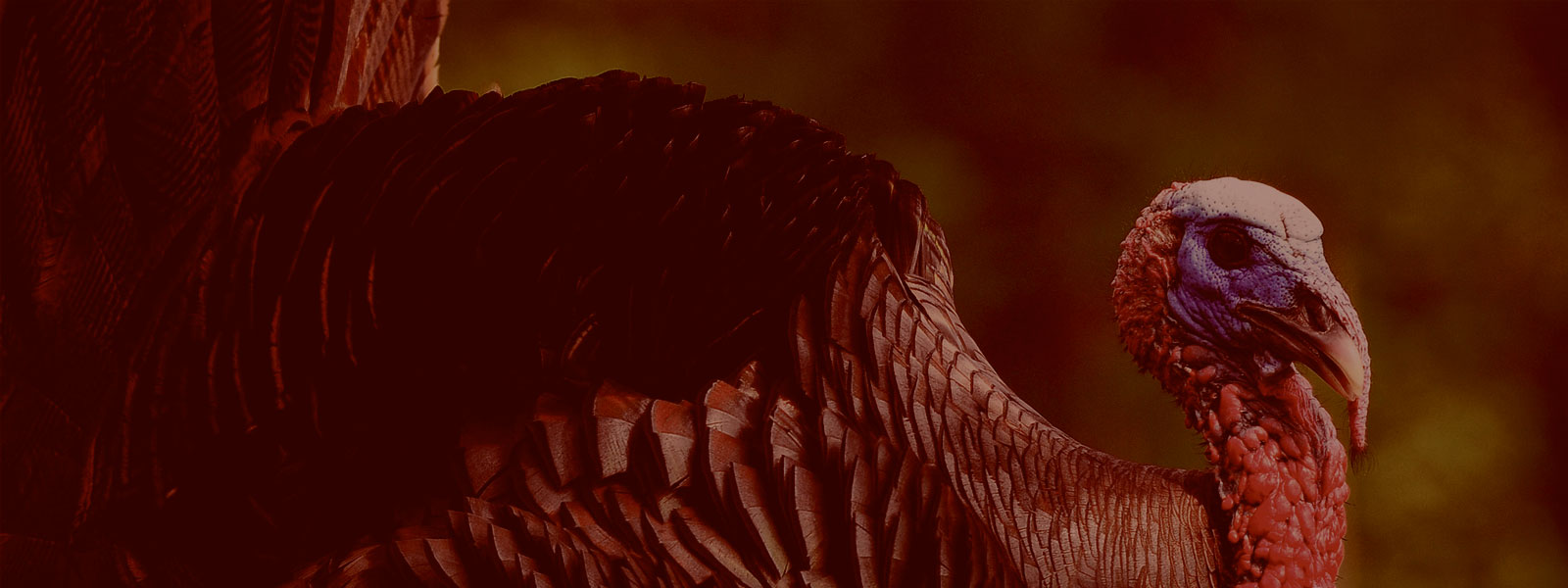 Outdoor Access Turkey Hunt Sweepstakes