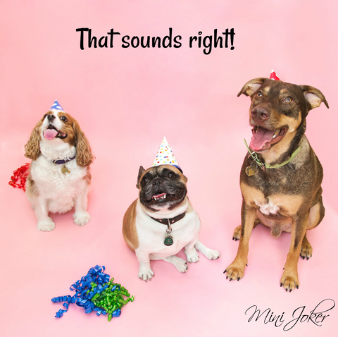 that's right meme, dogs meme, dogs party, dogs, pink, dog's birthday party