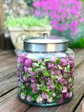 Red Clover Extract, Pure, Organic, Wild, Raw!