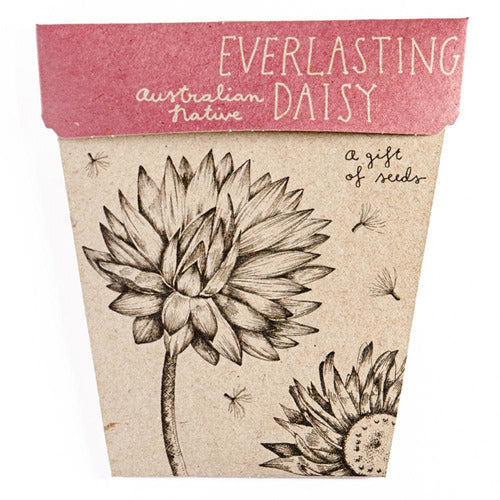 Everlasting Daisy Gift of Seeds