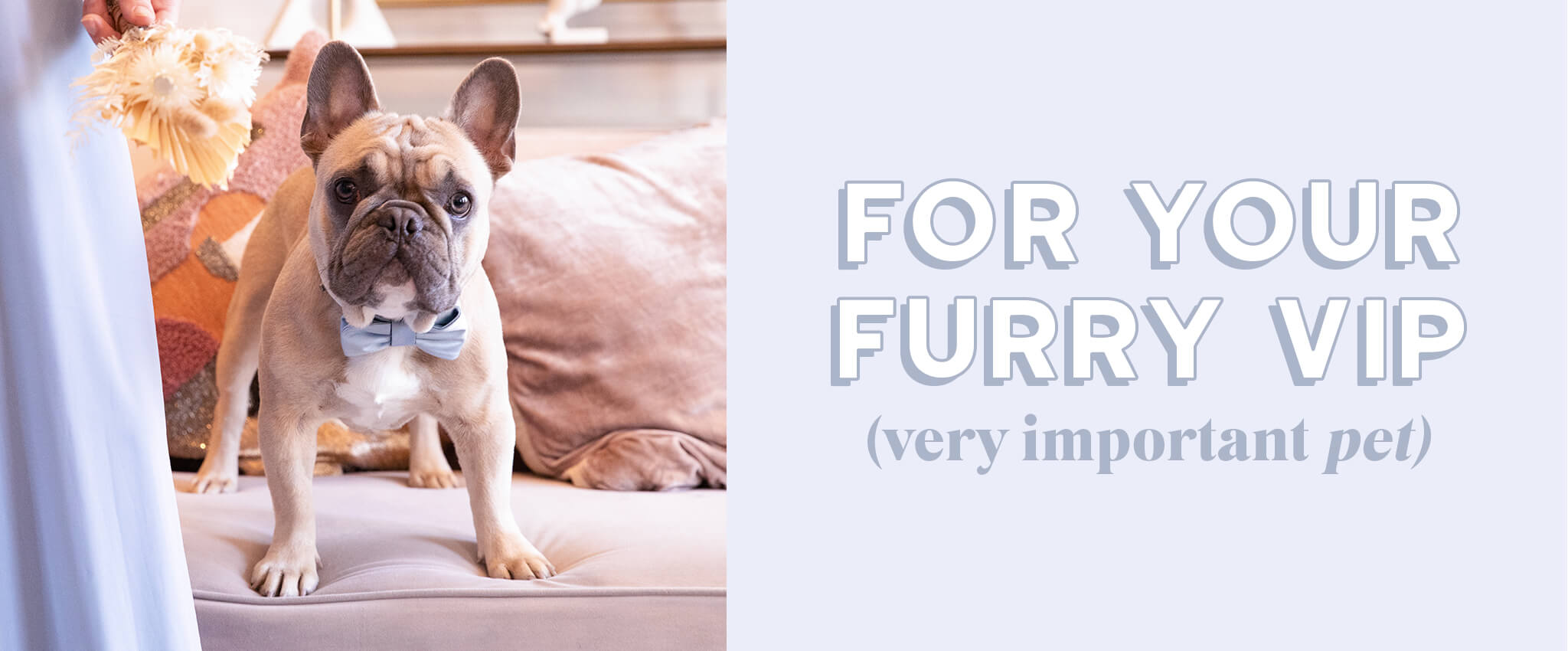 For Your Furry VIP (most important pet)