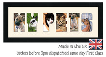 My Pets Photo Frame - My Pets CBC 19A 450mm x 151mm mount size  , Choices of frames & Borders