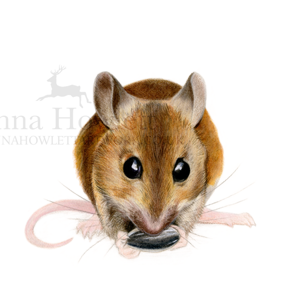 Field Mouse Study