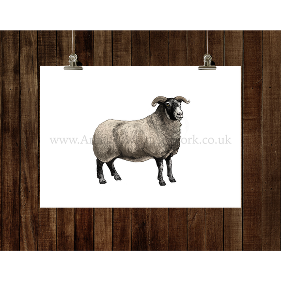 Blackface Sheep Fine Art Print