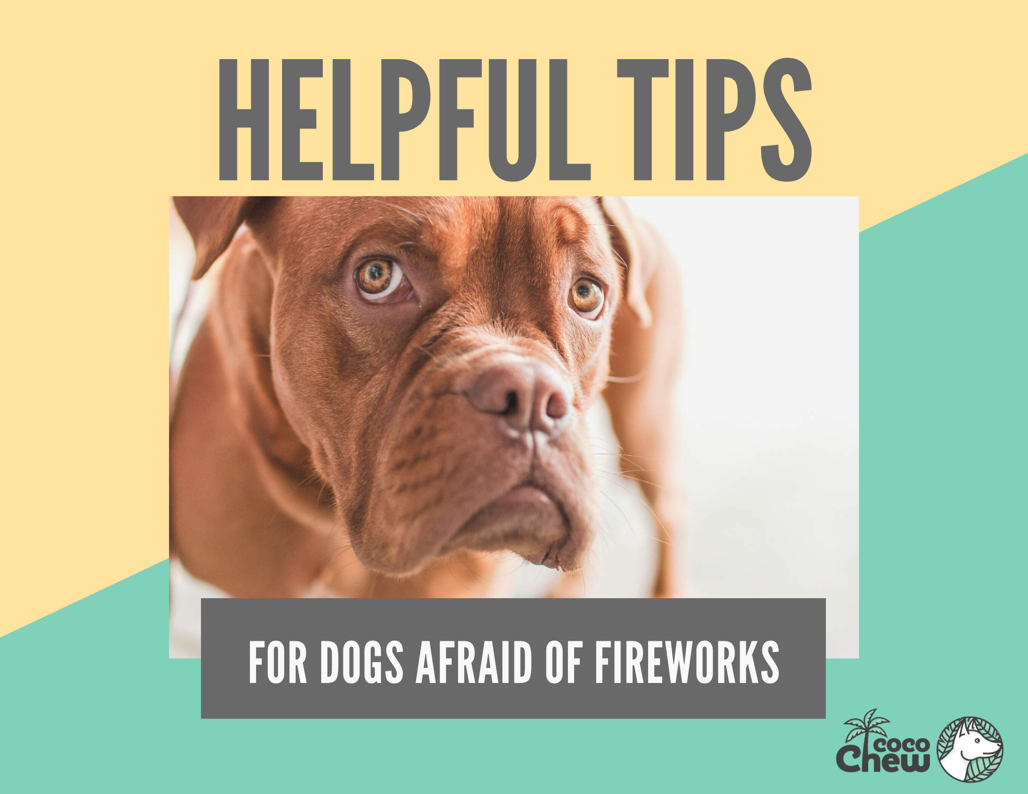 Helpful Tips For Dogs Afraid Of Fireworks