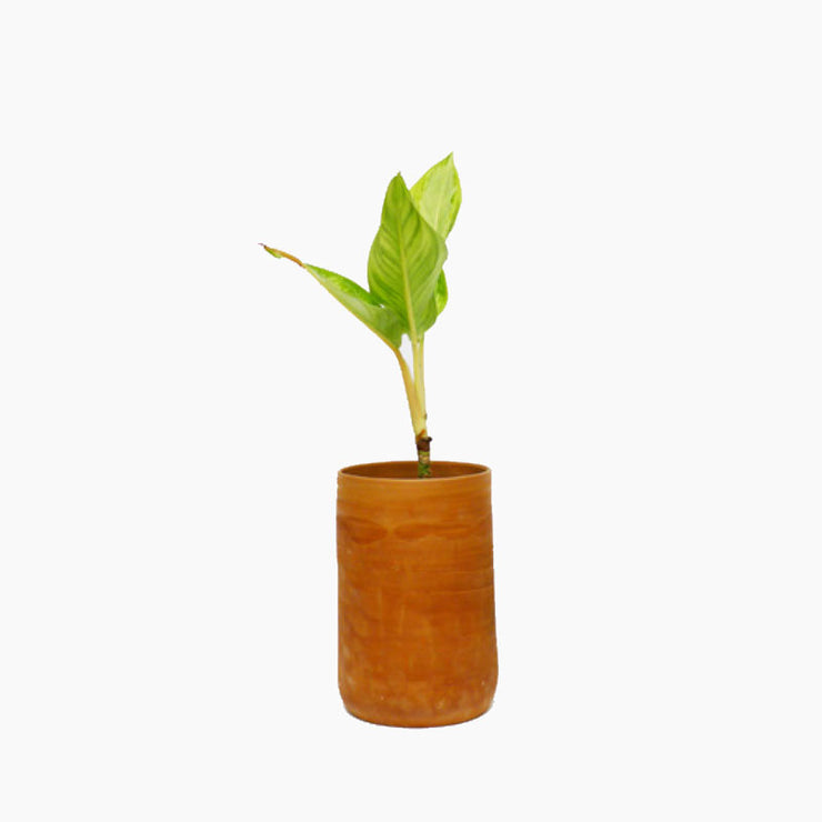 Cylindrical Terracotta Planter - Objects of Interest